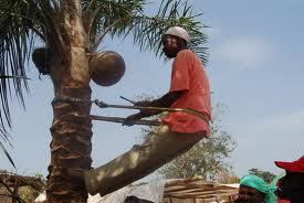 palmu-vins